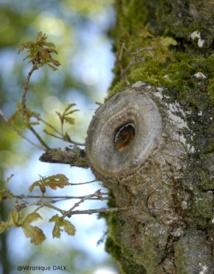 Serait-ce l'esprit d'un oiseau qui s'est fondu sur ce chêne ?